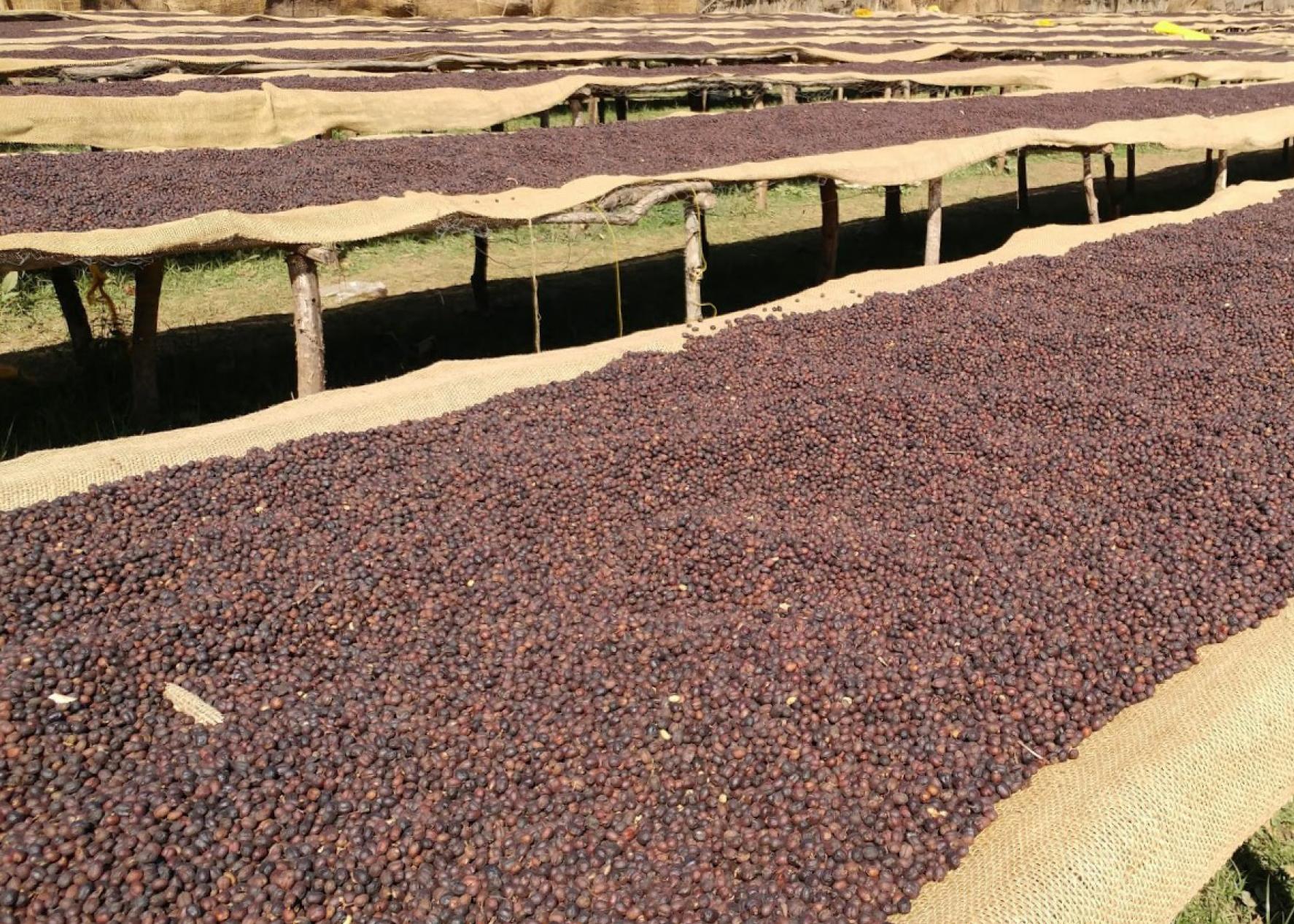 Trocknungsanlage für Kaffeebohnen Äthiopien